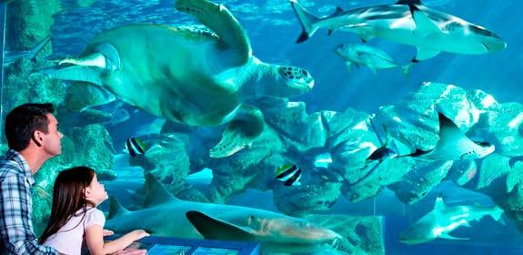 Oceanarium Aquarium